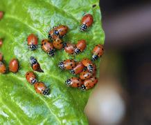 Découvrez les insectes en réalité augmentée